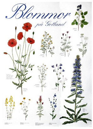 Poster Blommor på Gotland 10st/fp 29.-/st